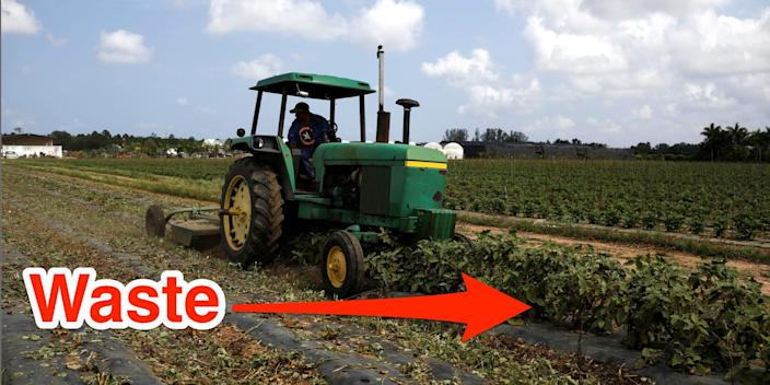 food  drink A worker in a farm tractor cuts eggplant bushes due to the lack of demand in the market during the coronavirus crisis, in Homestead, Florida, U.S., April 17, 2020. Edited by BI to add arrow.