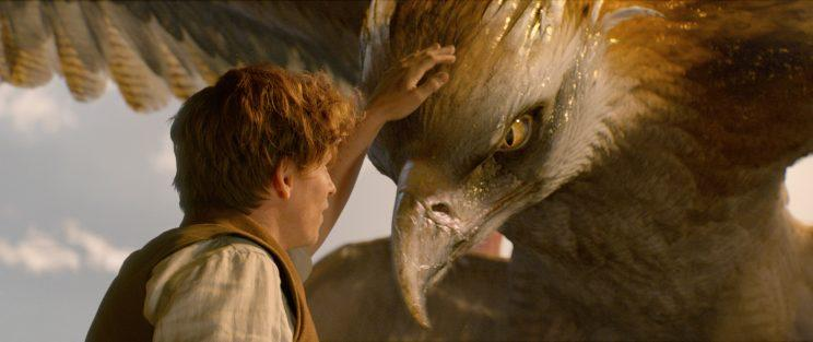 Newt and Frank the Thunderbird (Photo: Warner Bros.)