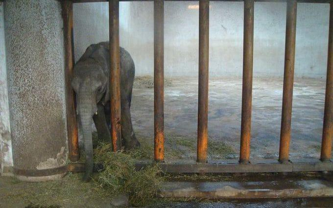 Elephants often become lonely when taken from the wild and trapped in a zoo, experts say - Humane Society International