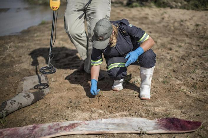 A forensic investigator looks for traces of spent ammunitions where a mutilated white rhino had been found on the banks of a river at the Kruger National Park, on September 12, 2014 (AFP Photo/Marco Longari)