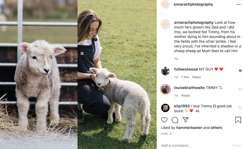 Images of Anna and sheep on social media