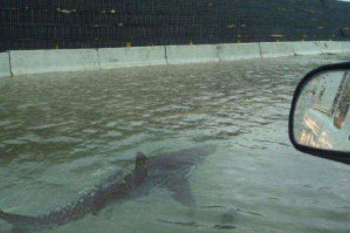 """<img alt=""""""""/><p>The internet has always been filled with hoaxes, fakes, liars, and cheats, long before the term """"fake news"""" became a household phrase. But no matter how many times a fake image of a shark swimming on a flooded highway shows up, the internet continues to fall for it.</p> <p><a rel=""""nofollow"""" href=""""http://mashable.com/category/hurricane-harvey/?utm_campaign=Mash-BD-Synd-Yahoo-Watercooler-Full&utm_cid=Mash-BD-Synd-Yahoo-Watercooler-Full"""">Hurricanes Harvey</a> and <a rel=""""nofollow"""" href=""""http://mashable.com/category/hurricane-irma/?utm_campaign=Mash-BD-Synd-Yahoo-Watercooler-Full&utm_cid=Mash-BD-Synd-Yahoo-Watercooler-Full"""">Irma</a> had major impacts on the U.S. in the last few weeks, which means social media was ripe with incredible stories, videos, and pictures of the storms and their aftermaths. Among the real stories, there were of course fakes. On Aug. 27, Twitter user Jason Michael <a rel=""""nofollow"""" href=""""https://twitter.com/Jeggit/status/902048241646280704"""">shared an infamous photo</a> of a shark swimming on a flooded highway.</p> <p>""""Believe it or not, this is a shark on the freeway in Houston, Texas,"""" he wrote.</p> <div><p>SEE ALSO: <a rel=""""nofollow"""" href=""""http://mashable.com/2017/09/07/pilot-fake-instagram-selfies/?utm_campaign=Mash-BD-Synd-Yahoo-Watercooler-Full&utm_cid=Mash-BD-Synd-Yahoo-Watercooler-Full"""">'Pilot' says he Photoshops his selfies, and yet somehow people still think they're real</a></p></div> <div><div><blockquote> <p>Believe it or not, this is a shark on the freeway in Houston, Texas. <a rel=""""nofollow"""" href=""""https://twitter.com/hashtag/HurricaneHarvy?src=hash"""">#HurricaneHarvy</a> <a rel=""""nofollow"""" href=""""https://t.co/ANkEiEQ3Y6"""">pic.twitter.com/ANkEiEQ3Y6</a></p> <p>— Jason Michael (@Jeggit) <a rel=""""nofollow"""" href=""""https://twitter.com/Jeggit/status/902048241646280704"""">August 28, 2017</a></p> </blockquote></div></div> <p>Turns out the Dublin-based journalist was apparently just trying to make a point. The tweet received over 88,00"""