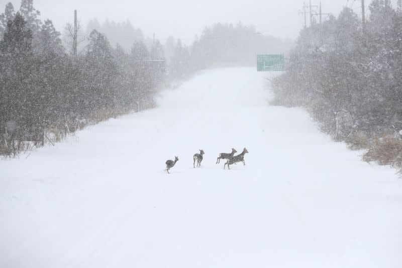 Heavy snowfall on Jeju island