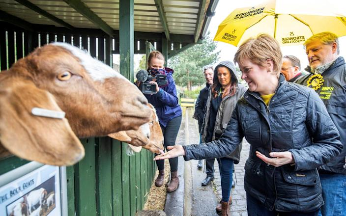 Feeling gruff? New poll puts SNP ahead in tomorrow's elections - Reuters