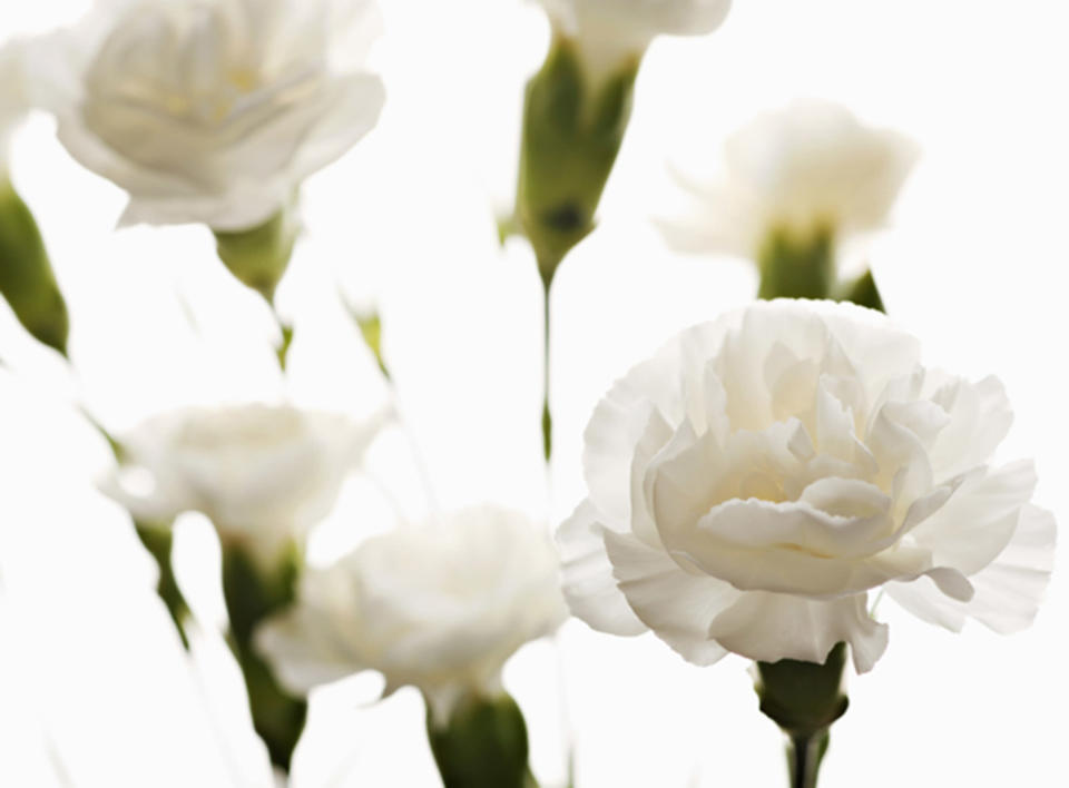 White carnations (Getty Images stock)