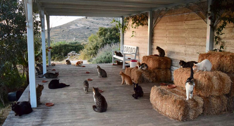 How you can live on cat island in Greece.