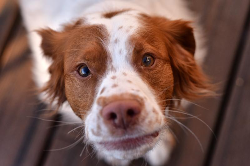 Can You Adopt In Ca If Your Dog Bit You