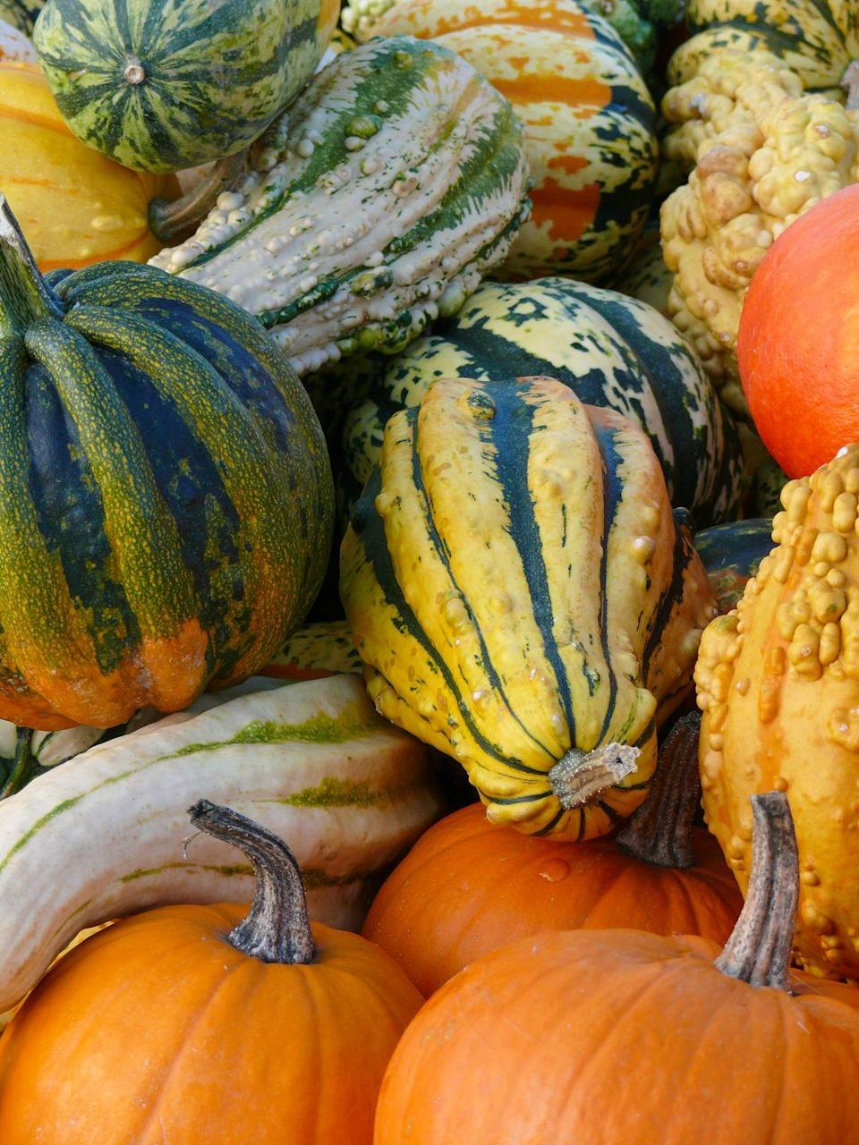 "<p>That's right, your zucchini and Jack o' lanterns are one and the same: <em><a href=""https://www.goodhousekeeping.com/food-recipes/a21246075/is-pumpkin-a-fruit/"" rel=""nofollow noopener"" target=""_blank"" data-ylk=""slk:Cucurbita pepo"" class=""link rapid-noclick-resp"">Cucurbita pepo</a></em>, a species that originated in Mexico more than 10,000 years ago. Farmers have since developed the many cultivars we know and use today. </p><p><strong>RELATED: </strong><a href=""https://www.goodhousekeeping.com/food-recipes/g562/zucchini-recipes/"" rel=""nofollow noopener"" target=""_blank"" data-ylk=""slk:40 Healthy and Delicious Zucchini Recipes"" class=""link rapid-noclick-resp"">40 Healthy and Delicious Zucchini Recipes</a></p>"