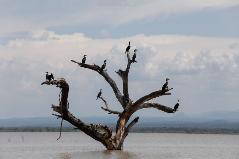 Kenyans fear 'ecological disaster' if two swollen lakes merge