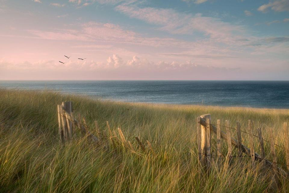 <p>Beach grass sways during an end-of-summer breeze in Provincetown.</p>
