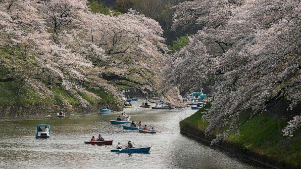 PHOTO: People enjoy the cherry blossoms on Chidorigafuchi Moat, northwest of the Imperial Palace in Tokyo, Japan, March 30, 2021. (Kimimasa Mayama/EPA via Shutterstock)