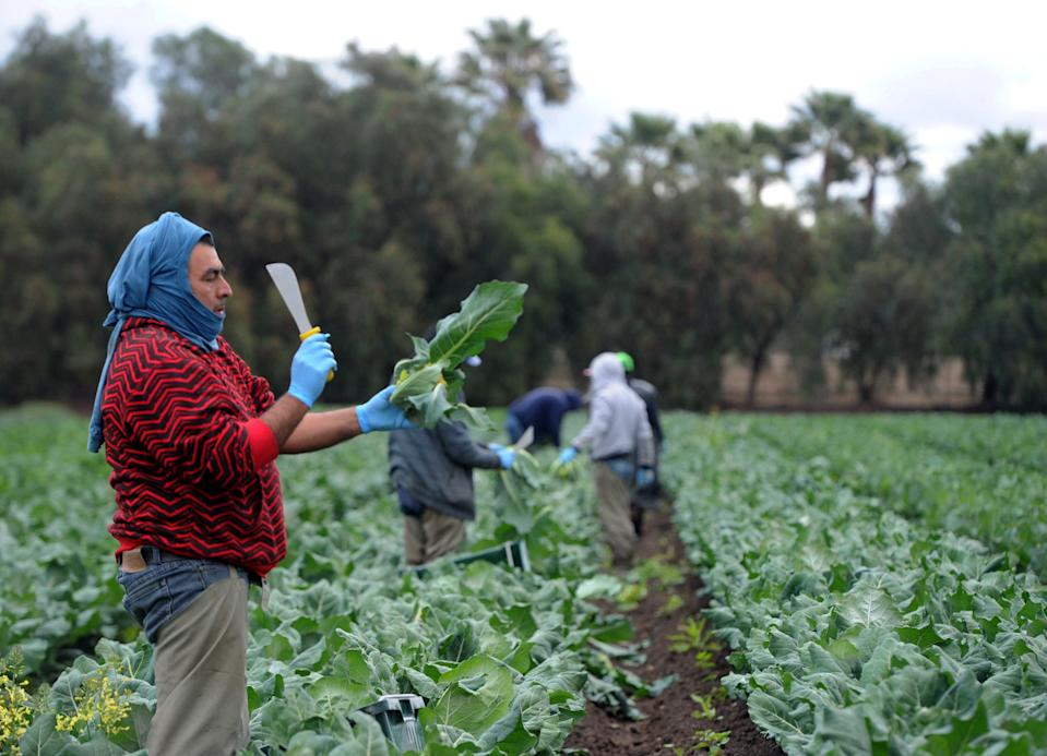 Clara Monroy cuts the leaves off broccoli at Underwood Family Farms in Moorpark on Friday, March 20, 2020