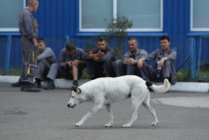 <p>Workers on a break watch a stray dog saunter by outside an administrative building inside the exclusion zone at the Chernobyl nuclear power plant on Aug. 18, 2017, near Chernobyl, Ukraine. (Photo: Sean Gallup/Getty Images) </p>