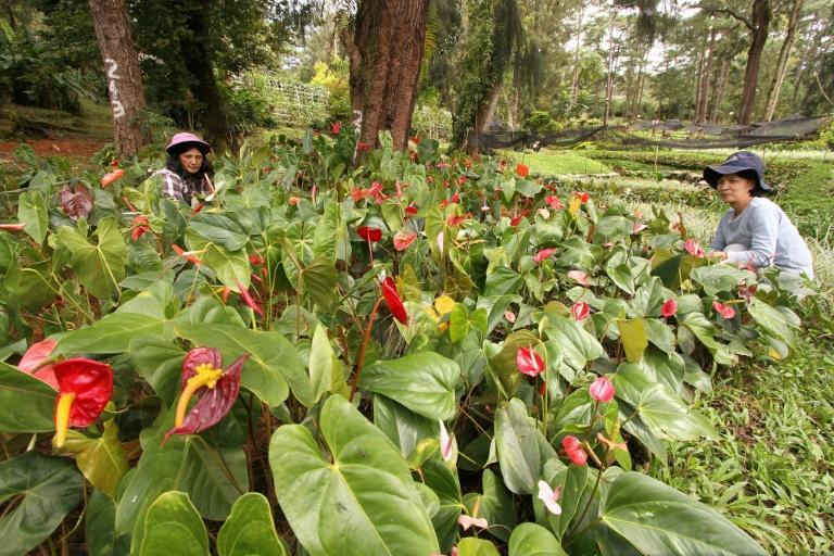 "The stress of lockdown and financial pressure caused by the pandemic have prompted a gardening craze in the Philippines, dubbed ""plantdemic"""