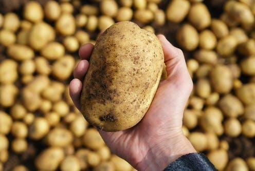 """<span class=""""caption"""">Potatoes have been given a hard time.</span> <span class=""""attribution""""><a class=""""link rapid-noclick-resp"""" href=""""https://www.shutterstock.com/image-photo/freshly-harvested-potato-hand-good-harvest-1169553196"""" rel=""""nofollow noopener"""" target=""""_blank"""" data-ylk=""""slk:Sergej Cash/ Shutterstock"""">Sergej Cash/ Shutterstock</a></span>"""