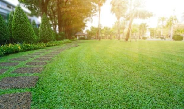 For homeowners who want a well-manicured lawn without dandelions, which discourages pollinators, they'll need to apply fertilizer and lime liberally, overseeding often, watering frequently and using a blend of grasses.
