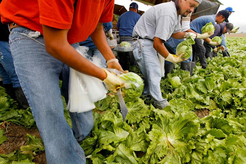 Workers harvest iceberg lettuce at a California farm for the Nunes Company, which handles more than 20,000 crop acres of various fresh vegetables annually. (Photo: Tony Avelar via Getty Images)