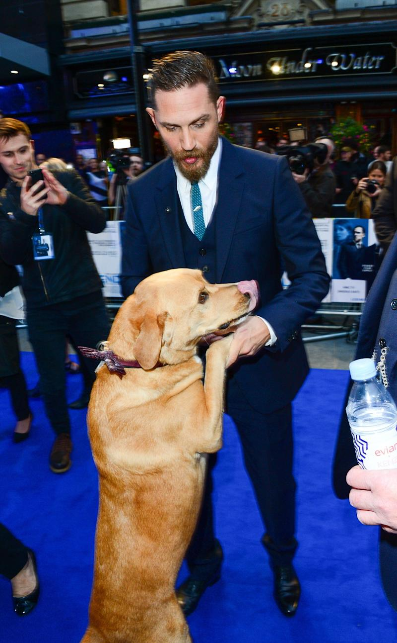 MANDATORY BYLINE: John Furniss / Corbis<BR/> World Premiere of Legend on Thursday 3rd September, London, England. <P> Pictured: Woody, Tom Hardy <B>Ref: SPL1116200 030915 </B><BR/> Picture by: Jon Furniss/Corbis<BR/> </P><P> <B>Splash News and Pictures</B><BR/> Los Angeles: 310-821-2666<BR/> New York: 212-619-2666<BR/> London: 870-934-2666<BR/> photodesk@splashnews.com<BR/> </P>