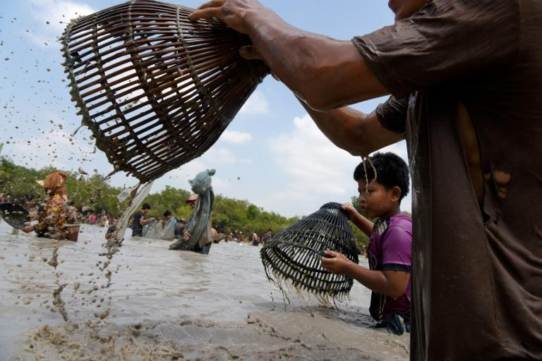 Locals race to trap the freshwater catfish and snakehead fish in Cambodia's muddy Boeung Kroam lake