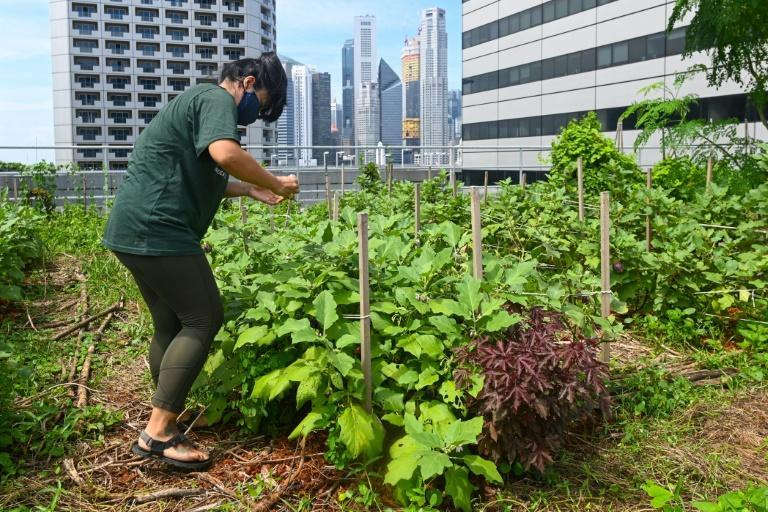 Tree planting on rooftops and other forms of urban vegetation can reduce urban heat in summer