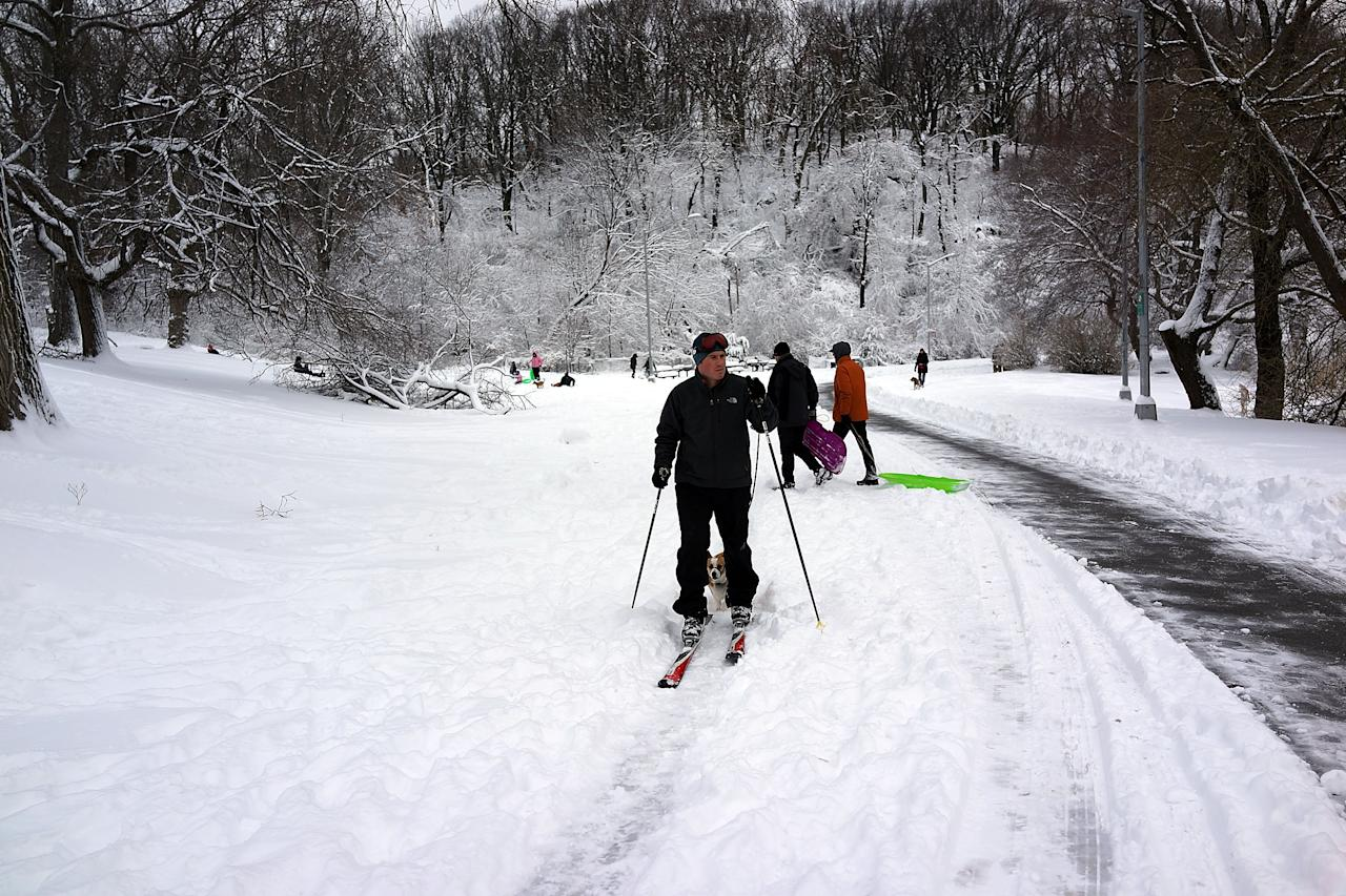 NEW YORK, NY - FEBRUARY 09:  A man cross country skis in Prospect Park in Brooklyn the morning after a massive snow storm on February 9, 2013 in New York City. New Yorkers woke up to over 10 inches of snow Saturday morning  while parts of New England received over thirty inches following a storm that brought high winds and blizzard like conditions to the region.  (Photo by Spencer Platt/Getty Images)