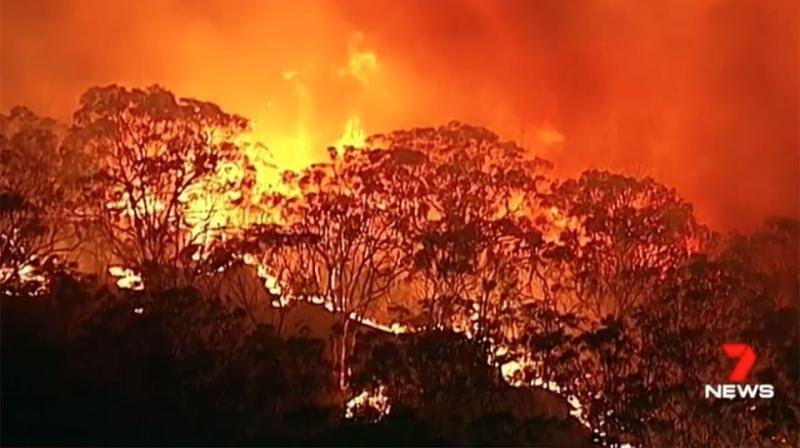 Police are hunting for an arsonist who sparked a bushfire in Sydney's southwest. Source: 7 News