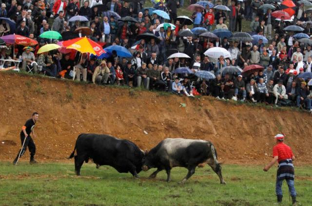 FILE PHOTO: Two bulls fight in the Granice village near Busovaca, about 80km from the capital Sarajevo as thousands of Bosnians gather to watch in a tradition that dates back over 200 years.