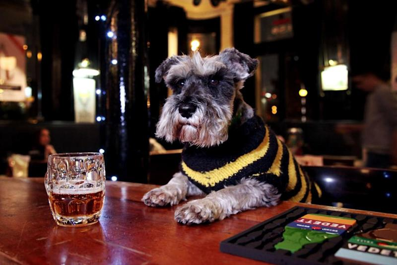 Boozy puppies: Our rePAWters check out the best dog-friendly pubs in London: Great British Pub Dogs/@pubdogsGB