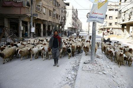 A man walks with a herd of sheep are seen in the besieged town of Douma, Eastern Ghouta, in Damascus, Syria March 11, 2018. REUTERS/ Bassam Khabieh