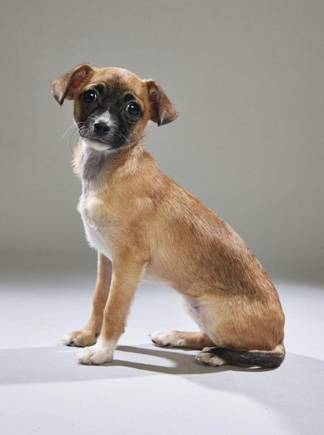 "<p>But has he ever adopted any Puppy Bowl players? ""That would be like an NFL ref marrying Tom Brady, which, come to think of it, would be awesome,"" he jokes. ""In all seriousness, I am a foster dad to shelter pups in my area. I recently fostered one puppy — Biscuit the chiweenie — who was selected to <em>be</em> in Puppy Bowl. Let's see how she performs on the field!""<br>(Photo: Animal Planet) </p>"