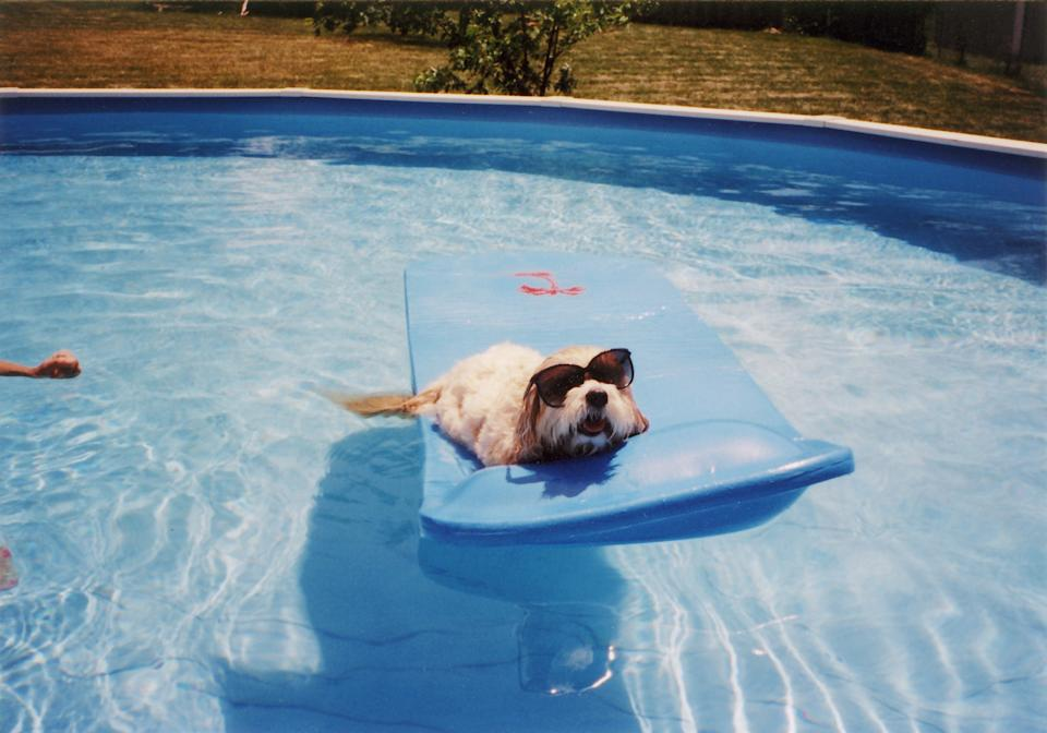 The summer dangers dog owners need to be aware of. (Getty Images)