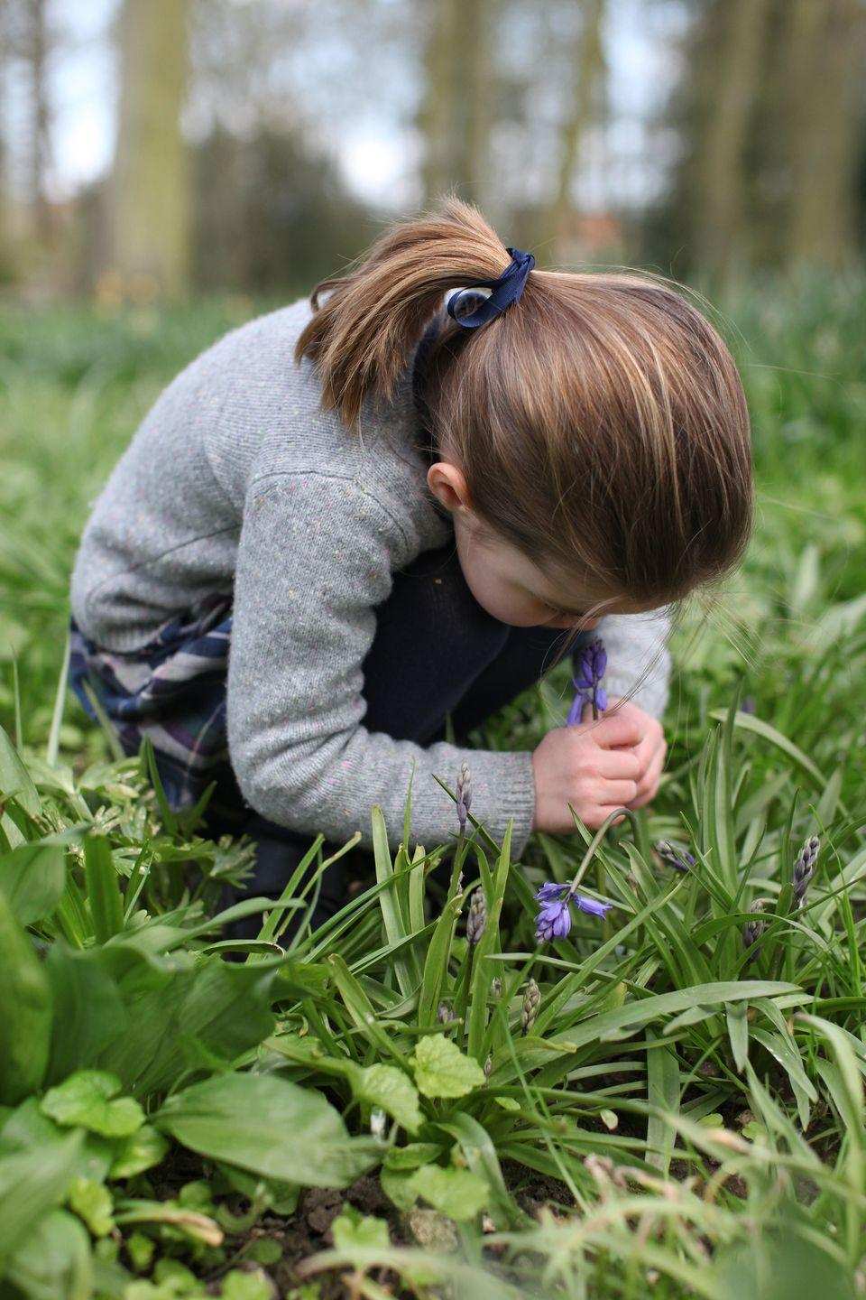 <p>Princess Charlotte crouches in a field of grass while observing a bluebell flower.</p>