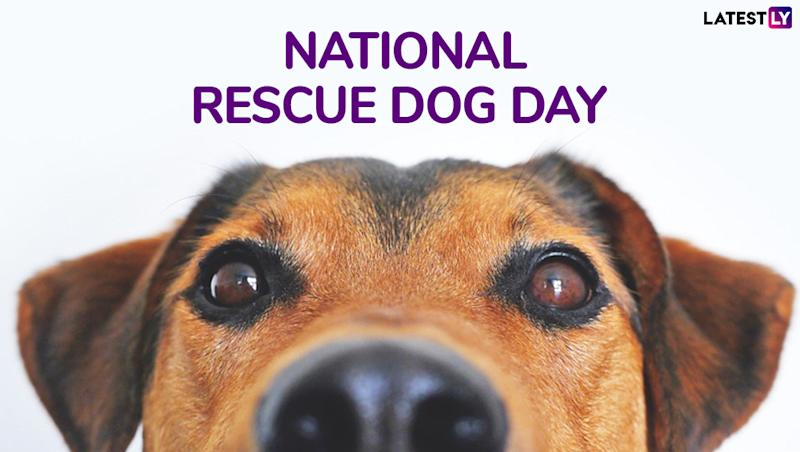 National Rescue Dog Day 2019: The History and Importance of Day Dedicated to Rescued Canines