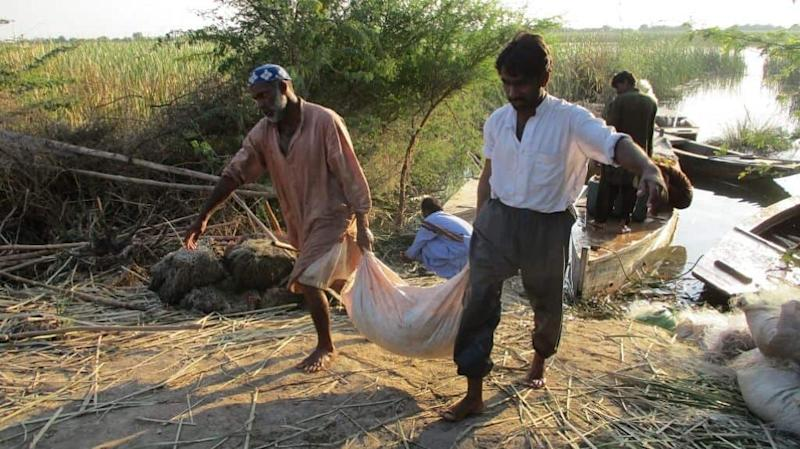 Multiple communities benefit from, and are dependent on, wetlands. All photos by Zulfiqar Kunbhar.