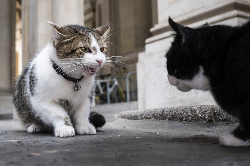 Larry the cat, who belongs to the Prime Minister and lives at 10 Downing Street, with Palmerston (Rex Features)