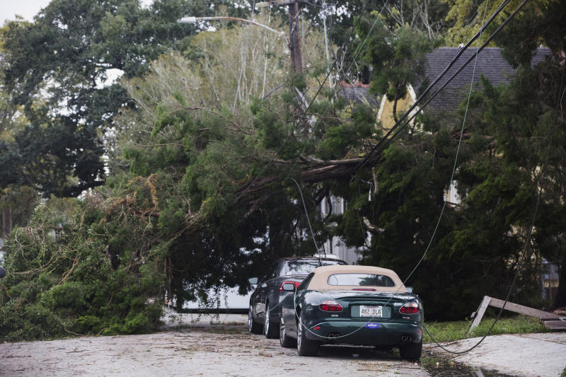 A tree lies on Camp Street by Henry Clay Avenue after a storm system called Tropical Storm Olga went through the area in New Orleans on Saturday, Oct. 26, 2019. (Sophia Germer/The Advocate via AP)