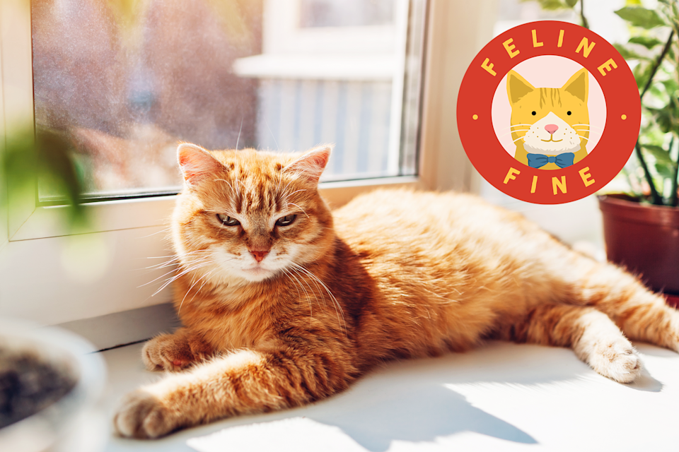 Keeping Your Cat Safe From Sunburns