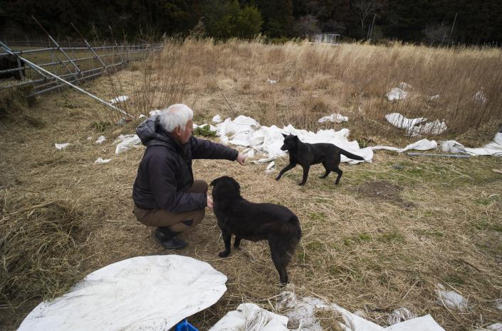 Naoto Matsumura pets his dogs during an interview with The Associated Press at his farm land in Tomioka town, Fukushima prefecture, northeastern Japan, Friday, Feb. 26, 2021. About 10 kilometers (6 miles) south of the wrecked Fukushima Dai-ichi nuclear power plant, rice farmer Matsumura defied a government evacuation order and stayed on his farm to protect his land the cattle abandoned by neighbors a decade ago. (AP Photo/Hiro Komae)