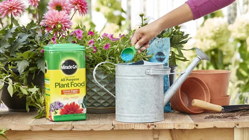 Miracle-Gro plant food on a table next to flowers and a watering can