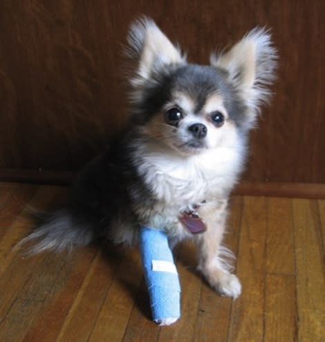 How to avoid costly vet bills