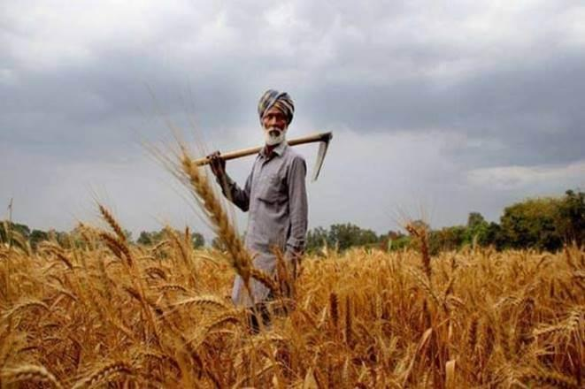 Kharif crop, Kharif crop in india, Kharif season, icar, foodgrain, rice, wheat, pulses, coarse cereal, economy news
