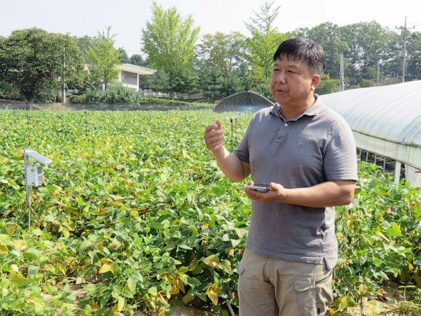 PHOTO: Farmer Kim Yong Sung demonstrates how he can perform remote-controlled irrigation with a smartphone at the village's first smart farm in Paju, South Korea, Sept. 30, 2019. (Hansol Park)