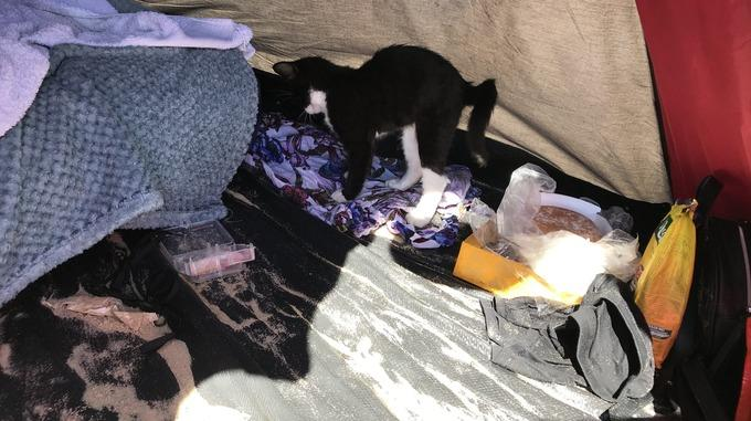The kitten was taken to Bournemouth beach in hot temperatures (Picture: RSPCA)