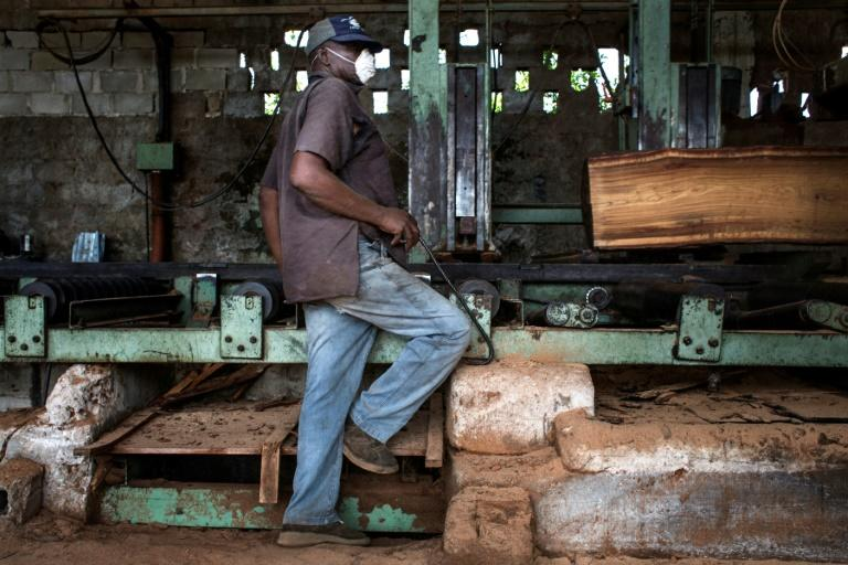 "Mozambique's wood processing industry has embraced the new government measures to fight illegal logging, ""as the processing of wood locally will create more jobs locally,"" said one sawmill owner"