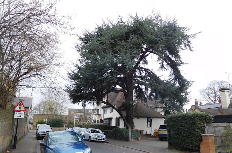 Stephen Lawrence had previously made two failed applications to fell the protected tree (Picture: SWNS)