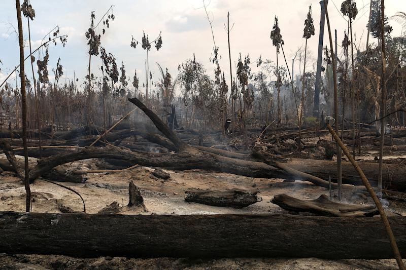 """A burnt area in a forest is seen during """"Operation Green Wave"""" conducted by agents of the Brazilian Institute for the Environment and Renewable Natural Resources, or Ibama, to combat illegal logging in Apui, in the southern region of the state of Amazonas, Brazil, July 31, 2017. REUTERS/Bruno Kelly SEARCH """"DEFORESTATION"""" FOR THIS STORY. SEARCH """"WIDER IMAGE"""" FOR ALL STORIES."""
