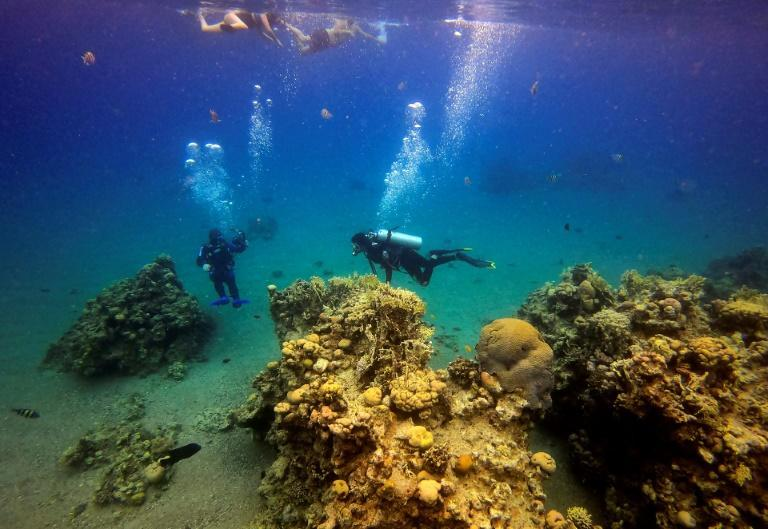 Scuba divers at a coral reef while on a dive in the Red Sea waters off the coast of Israel's southern port city of Eilat