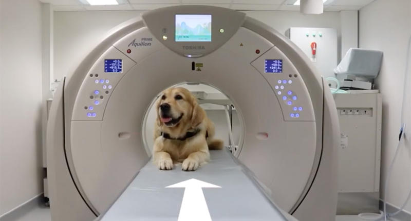 Leo the therapy dog at Southampton Children's Hospital getting an x-ray.