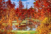 """<p>Backwaters never looked so beautiful! During late November, the already stunning landscape of Lake Conway in Central Arkansas transforms into the vibrant display of red, orange, and yellow you see here.</p><p><a class=""""link rapid-noclick-resp"""" href=""""https://go.redirectingat.com?id=74968X1596630&url=https%3A%2F%2Fwww.tripadvisor.com%2FHotels-g31723-Lake_Village_Arkansas-Hotels.html&sref=https%3A%2F%2Fwww.thepioneerwoman.com%2Fhome-lifestyle%2Fg36804013%2Fbest-places-to-see-fall-foliage%2F"""" rel=""""nofollow noopener"""" target=""""_blank"""" data-ylk=""""slk:FIND A HOTEL"""">FIND A HOTEL</a></p>"""