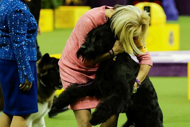 <p>Ty, a giant schnauzer with handler Katie Bernardin, wins in the working group during competition at the 142nd Westminster Kennel Club Dog Show in New York, Feb. 13, 2018. (Photo: Eduardo Munoz/Reuters) </p>